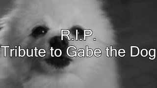 R.I.P. Gabe the Dog (Tribute)