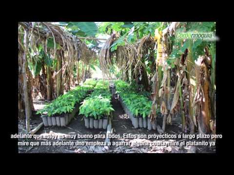 Corporinoquia - Sistemas Agroforestales