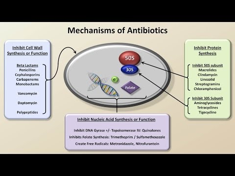 Mechanisms and Classification of Antibiotics (Antibiotics - Lecture 3) (видео)