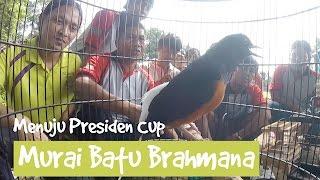Video PRESIDEN CUP : Gagal Mudik ! Polisi Air Nyoman Siapkan Murai Batu Brahmana Ke PIALA PRESIDEN MP3, 3GP, MP4, WEBM, AVI, FLV Juni 2018