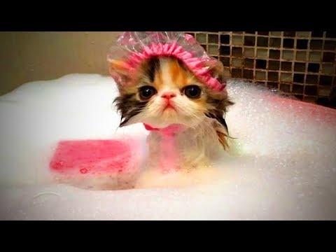 Funny cat videos - Funny Cats  Funny Cute Cats Fails (Full) [Funny Pets]
