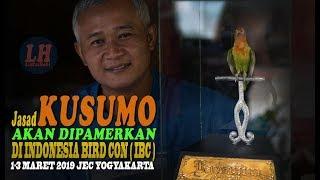 Video Jasad KUSUMO Sang Legenda Tawa Akan Di Pamerkan Di Indonesia Bird Con ( IBC ) MP3, 3GP, MP4, WEBM, AVI, FLV Maret 2019