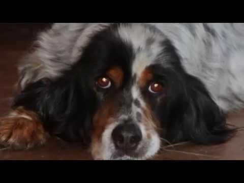 menta - la commovente storia di un cane abbandonato.