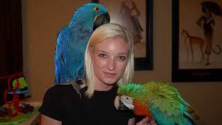Becoming An Avian Vet Or Trainer Or Birdtricks Com Trainer
