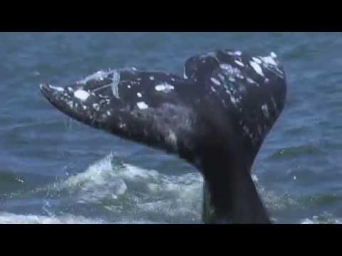 EXCLUSIVE INTERVIEW: Paul Watson from Sea Shepherd