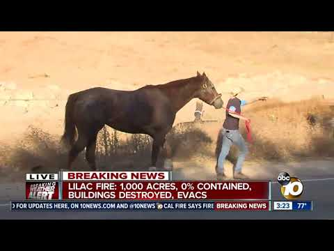 Horses being evacuated amid Lilac Fire
