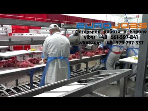 Отзыв о работе в Польше на мясокомбинате EuroJobs
