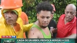 Caída de un árbol provoca heridas a dos personas en Cenoví, provincia Duarte