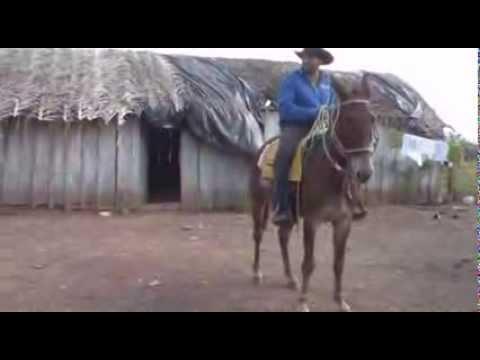 Faz. Rancho Do Vale...Sao Felix do Xingu ..PA !!!