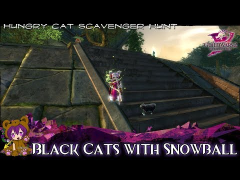 ★ Guild Wars 2 ★ - Black Cats with Snowball (Home Instance Cat)