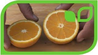 Blondorangen: Ernten und degustieren