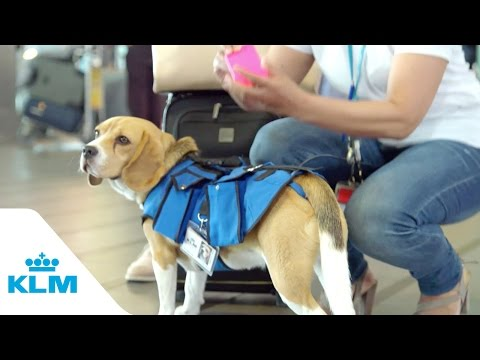 The KLM Retreiving Dog