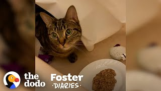 Scared Cat Slowly Warms Up To Foster Dad | The Dodo Foster Diaries by The Dodo