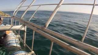 Kleinbaai South Africa  City pictures : GoPro Shark Cage Diving - Gansbaai, South Africa