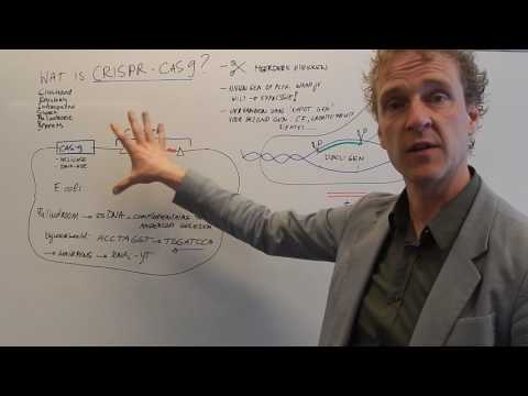 Wat is CRISPR?