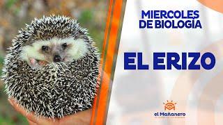 Miercoles de Biología – El Erizo