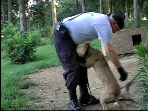 Federal Dog Fighting Raid- July 2009