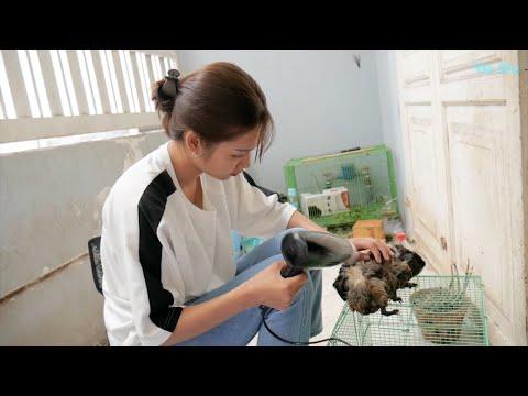 Vie Girl Tắm Rửa Cho Chuột Lang