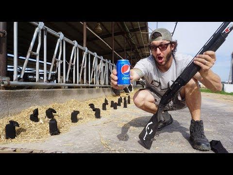 HOMEMADE Starling Decoy Challenge!!! (I CATCH A BIRD!)