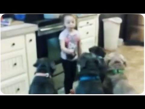 4 Year Old In Control Of Pit Bulls