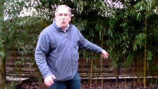 #330 Schneiden im Garten 2011 Herr Inderkum 10v10 - Bambushecke und Rhizomsperre