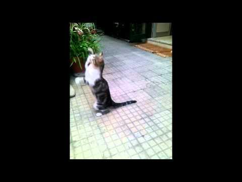 你以為狗狗才會裝死嗎?貓咪更會裝,最後那聲「慘叫」太可愛了