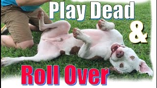 """Video How to Teach Your Dog to  Roll Over and """"Play Dead"""" FAST! MP3, 3GP, MP4, WEBM, AVI, FLV Agustus 2018"""