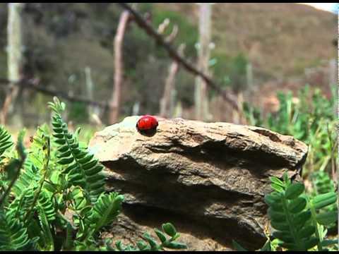 Quinta da Manoella - Wine & Soul