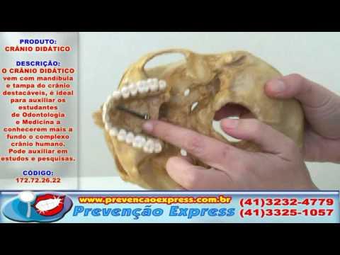 HD Crânio Didático