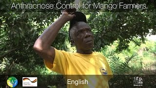 Video Anthracnose Control for Mango Farmers MP3, 3GP, MP4, WEBM, AVI, FLV Juni 2018