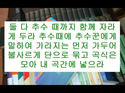 마태복음영해설교13장24-30절