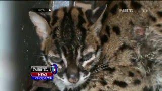 Download Video Warga Selamatkan Kucing Batu yang Menjadi Korban Banjir - NET5 MP3 3GP MP4