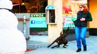 Funny - Scaring Puppy Dogs Prank With A Snowman Season 2 Episode 6