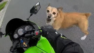 Video Angry Dogs Vs Bikers - WHEN DOGS ATTACK!! (Or Just Want to Say Hi) MP3, 3GP, MP4, WEBM, AVI, FLV Mei 2017
