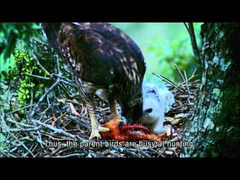 Colorful Habitat II -Dan Ta Rare Wildlife Introduction