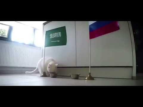 القط أخيل: يتوقع فوز السعودية على روسيا في مباراة