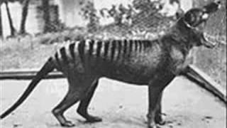 Video Extinct Animals 20th Century! MP3, 3GP, MP4, WEBM, AVI, FLV April 2019