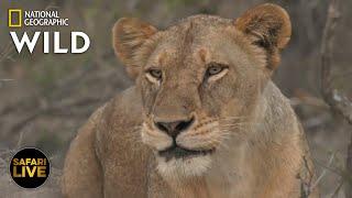 Safari Live - Day 271   Nat Geo Wild by Nat Geo WILD