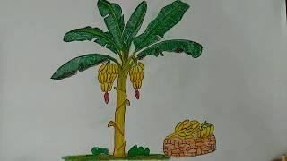 How To Draw An Banana Tree , colorful banana tree step by step.