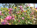 3 hours relaxing nature sounds for studying # Bird singing and spring flowers