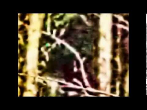 Analysis on Suspected Bigfoot Sighting October 2014
