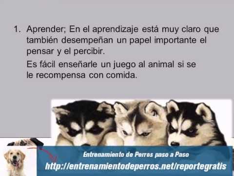 Los 7 Secretos Mejor Guardados del Adiestramiento Canino