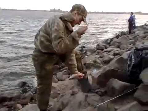 что такое смык на ловли рыбы видео