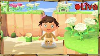 Animal Crossing - Zen Garden 2.0 - • Live