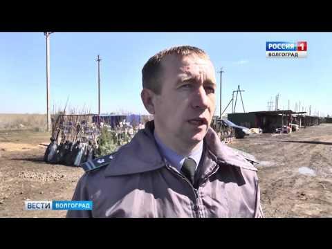 Сотрудники  Россельхознадзра контролируют саженцы в Волгоградской области