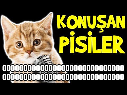 Konuşan Kediler 0000000000000000000000000000000000000000000000000000000000 - En Komik Kedi Videoları