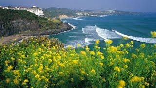 Jeju Island South Korea  city images : Jeju Island, South Korea - Best Travel Destination