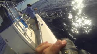 Exmouth Australia  city pictures gallery : Blue Marlin Peak Sportfishing Exmouth, Australia