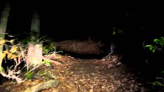 4. Night Ride Through the Woods in the RTV 900