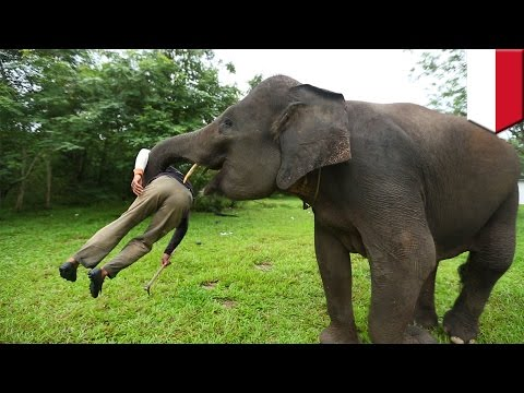 Video Elephant attack on tour operator in Bali, Indonesia leads to loss of life - TomoNews download in MP3, 3GP, MP4, WEBM, AVI, FLV January 2017